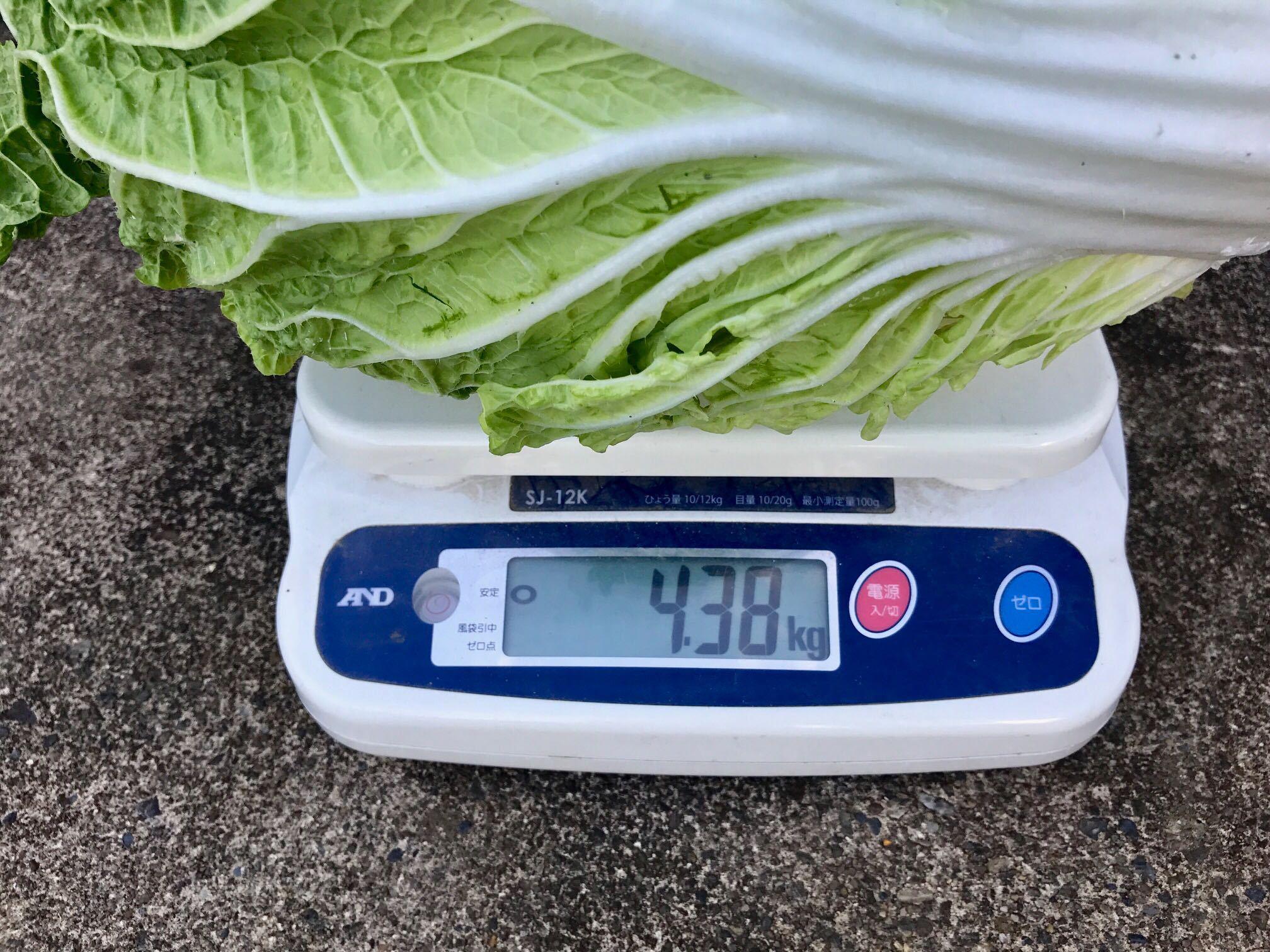 白菜の重さ