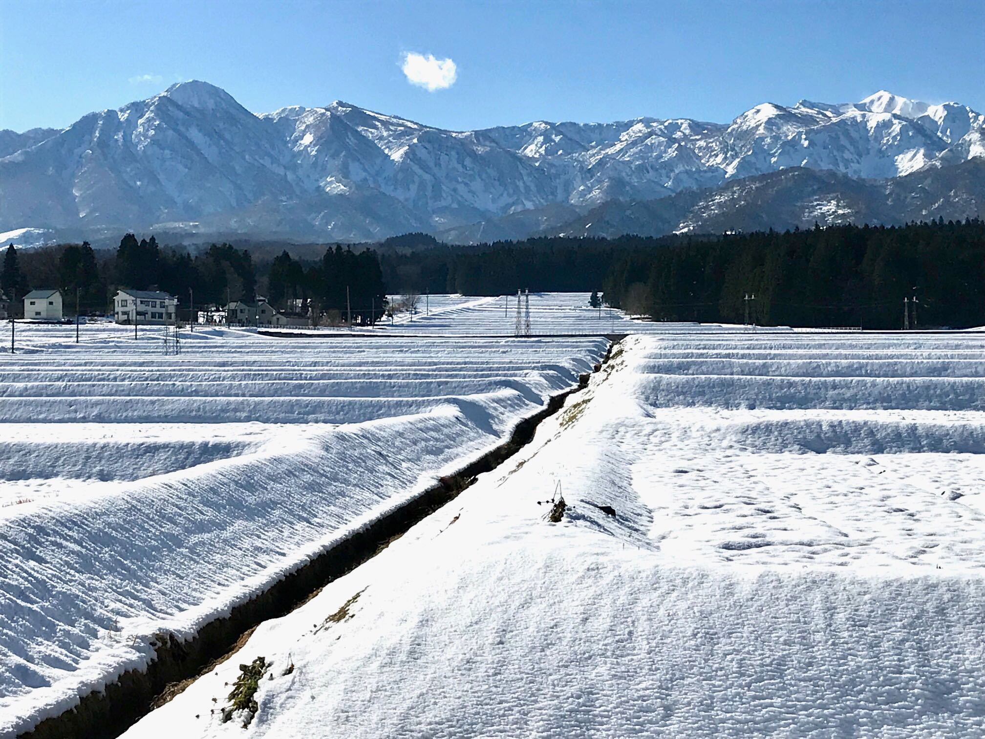 12月の田園風景