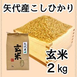 矢代産コシヒカリ玄米2キロ