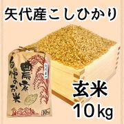 新潟県妙高市矢代産コシヒカリ 10㎏ 【玄米】 令和2年産 一等米